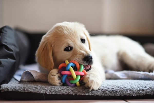 Sell Dog Toys and Treats